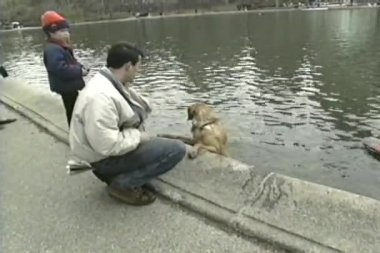Sunday in Central Park, New York, USA: dog swims — Stockvideo
