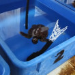 Young turtles at the Israel Sea Turtle Rescue and Rehabilitation Center - Stock Photo