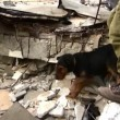 Stock Video: Rescue dogs with dog handlers search to rescue earthquake victims