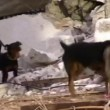 Rescue dogs with dog handlers search to rescue earthquake victims — Stock Video