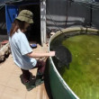 Volunteer at the Israel Sea Turtle Rescue and Rehabilitation Center, Michmoret — Stock Video