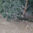 Brown floodwater flooded trees after rain — Stock Video