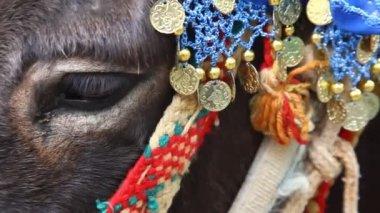 Arabische stijl ingericht ezel — Stockvideo