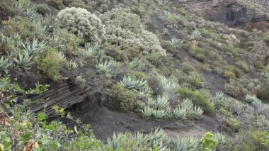 Typical vegetation at La Caldera de Bandama in volcanic island Gran Canaria — Stock Video