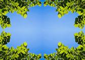 Cadre de feuilles d'été — Photo