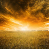 Autumn landscape with orange grass and sky during sunset — Stock Photo