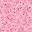 Background of pink bright beautiful roses — Stock Photo #38625827