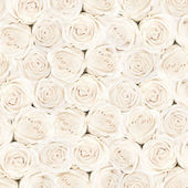 Background of white bright beautiful roses — Foto de Stock