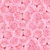 Background of pink bright beautiful roses — Stock fotografie