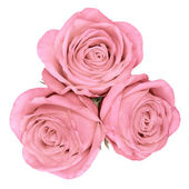 Up shot of pink bright beautiful roses — Foto Stock