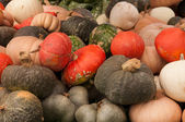 Gourds on Display — Stock Photo