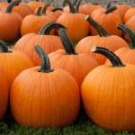 Pumpkins — Stock Photo #13742369