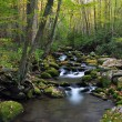 Mossy Creek — Stock Photo