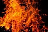 葉を燃焼 — ストック写真