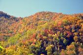 árboles de la montaña — Foto de Stock