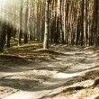 Sand road with sun rays in deep forest — Stock Photo