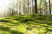 Urwald in der morgensonne — Stockfoto