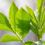hojas verde primavera y rayos de sol, enfoque selectivo — Foto de Stock