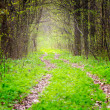 Way in deep spring forest, selective focus — Stock Photo