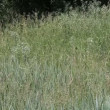 Girl walking across the meadow in sunny day — Vídeo de stock