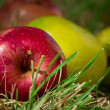 Apples lie on the grass — Stock Photo