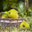 Apples in the basket — Stock Photo #13835970