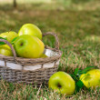 Apples in the basket — Stock Photo #13836666
