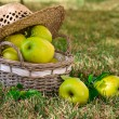 Apples in the basket — Stock Photo #13837262