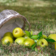 Apples in the basket — Stock Photo #13838059