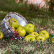 Apples in the basket — Stock Photo #13838506
