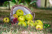 Apples in the basket — Stok fotoğraf