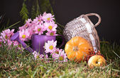Still life with pumpkin and watering — Stock Photo