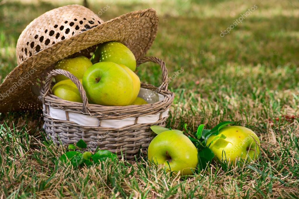 Green apples in a basket lay on the grass — Stock Photo #13837262