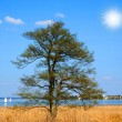 A lone tree by the lake in Autumn — Stock Photo