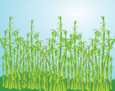 Abstract illustration of the bamboo — Stock Photo