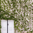 Green overgrown house and white doors - Stock Photo