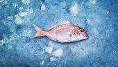Little fish on ice — Stock Photo