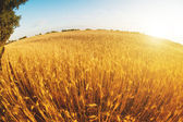 Beautiful field in sunny day — Stock Photo