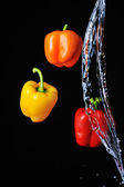 Three peppers water splash on black — Stock Photo