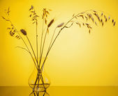 Bunch of wheat spikes in vase — Stock Photo