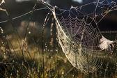 Cobweb świetle wschodzącego słońca — Zdjęcie stockowe