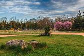 Güzel park bahçe — Stok fotoğraf