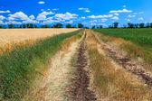 Rural road across field — Stock Photo