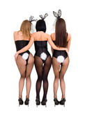 Sexy playgirls wearing a bunny costumes, back view — Stock Photo