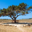 Wooden bench and alone tree against the sky - Stock Photo
