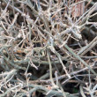Shrub branches without leaves — Stock Photo #38111009