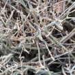 Stock Photo: Shrub branches without leaves