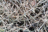 Shrub branches without leaves — Stock Photo
