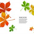 Fall colorful chestnuts leaves — Stock Vector