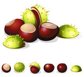 Chestnuts still life — Stock Vector